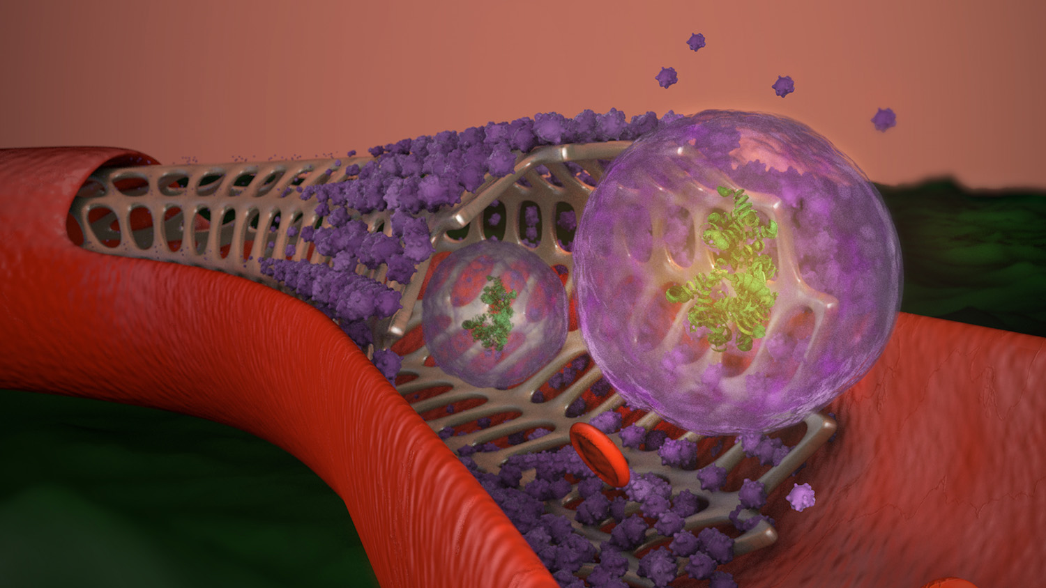 An artist's impression of the new exosome-eluding stent, which can promote healing while preventing inflammatory responses