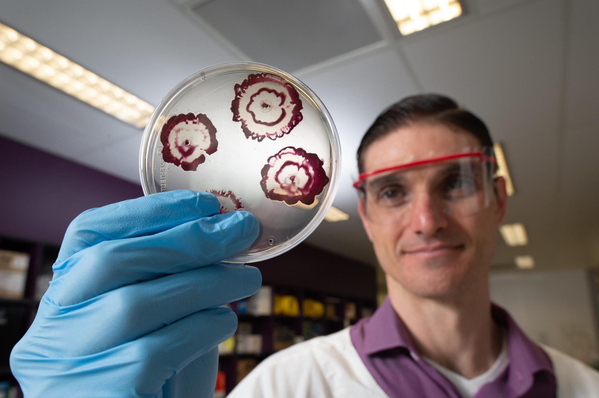 Hybrid antibiotics punch through bacterial biofilms