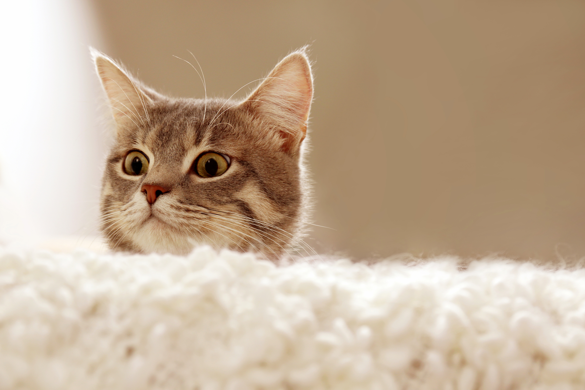 Comprehensive case studies have confirmed human-to-cat transmission of SARS-CoV-2