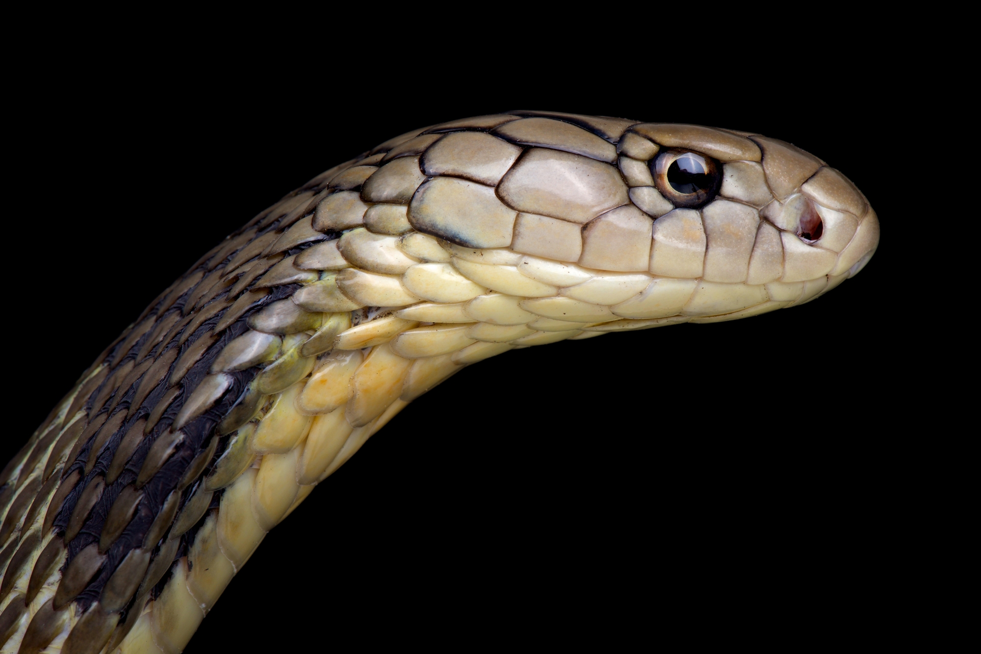 DNA study suggests snakes may be source of coronavirus outbreak