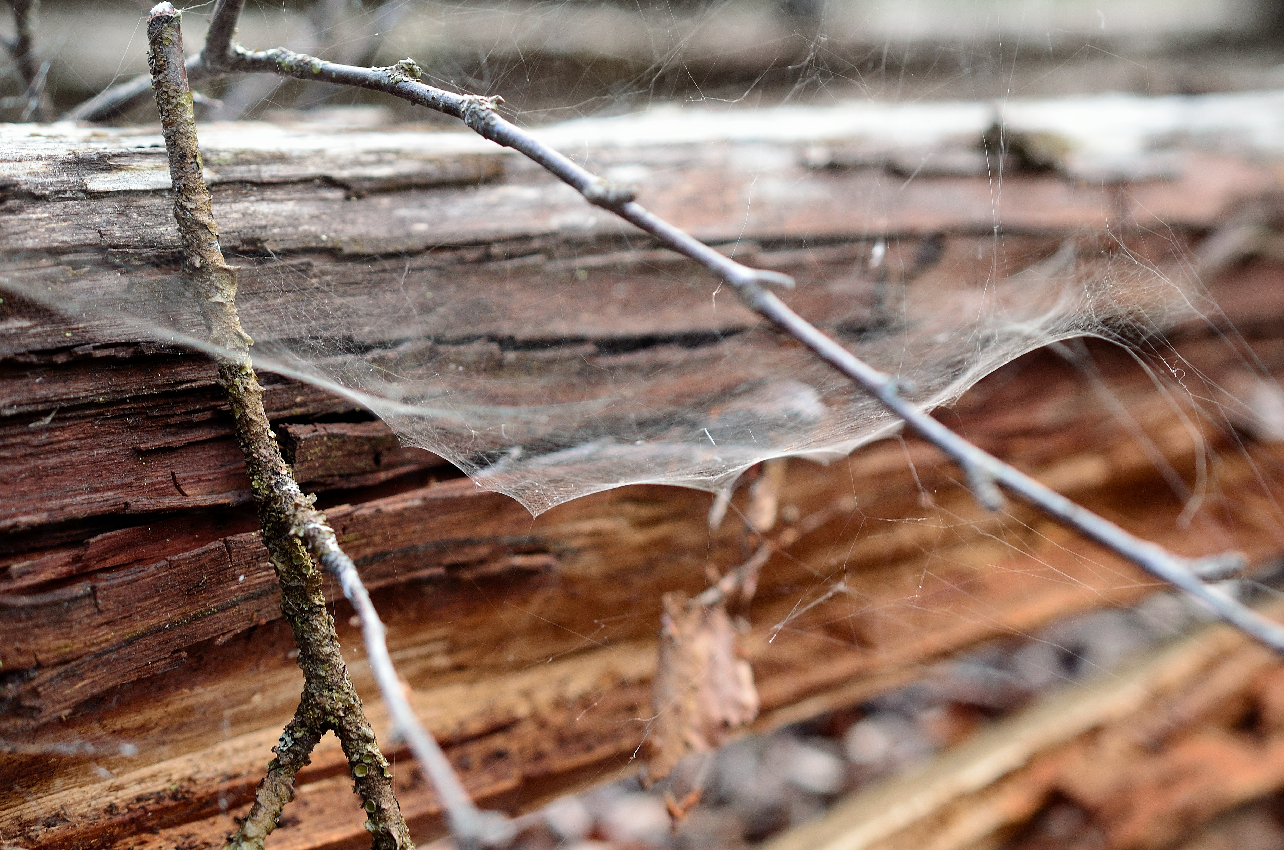 Plastic-alternative made from spider silk and wood