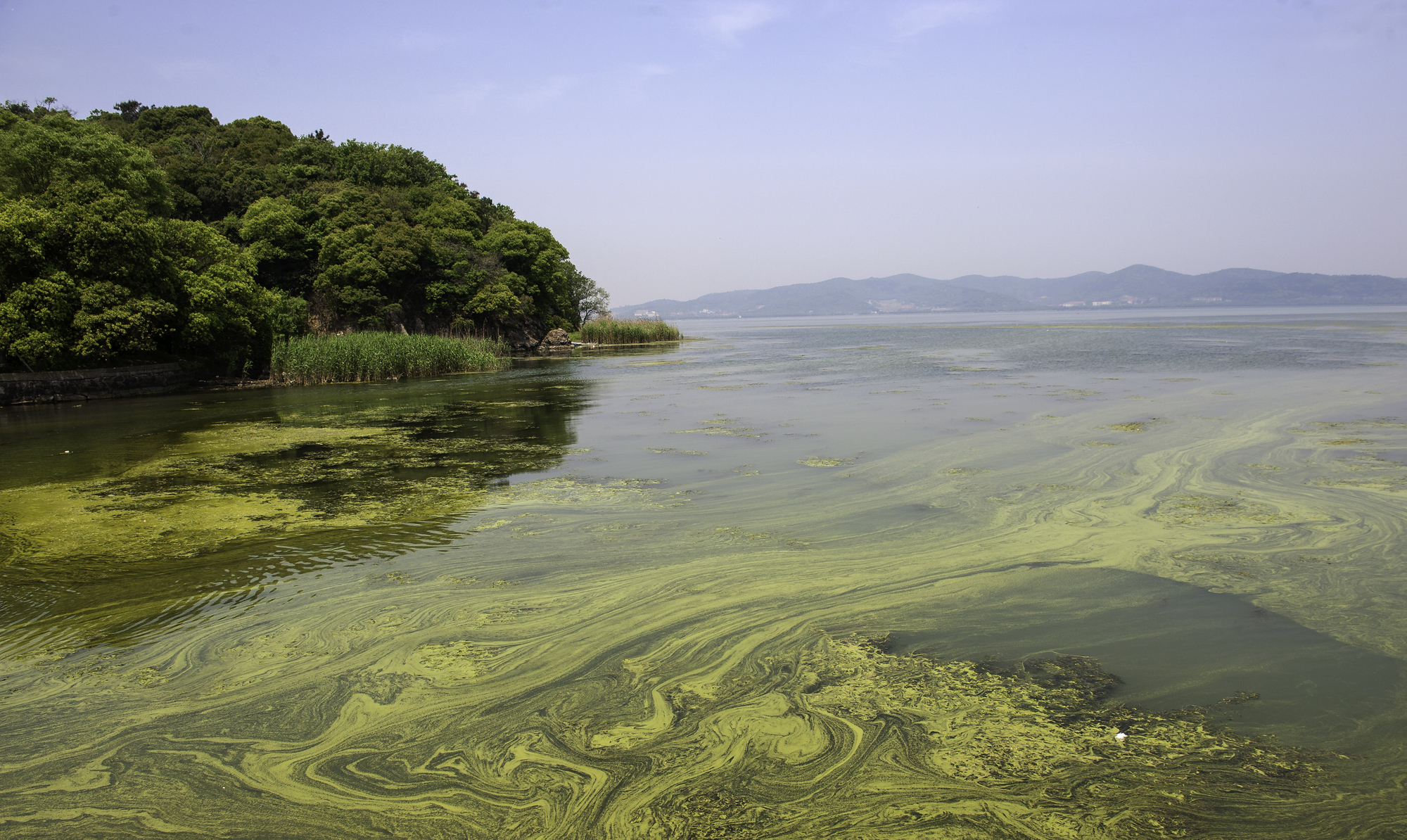 Phosphate pollution drives environmentally damaging algae blooms, and scientists have developed a new material that could help tackle the problem