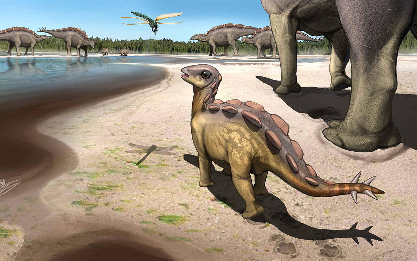 An illustration depicting what the juvenile stegosaur may have looked like in life