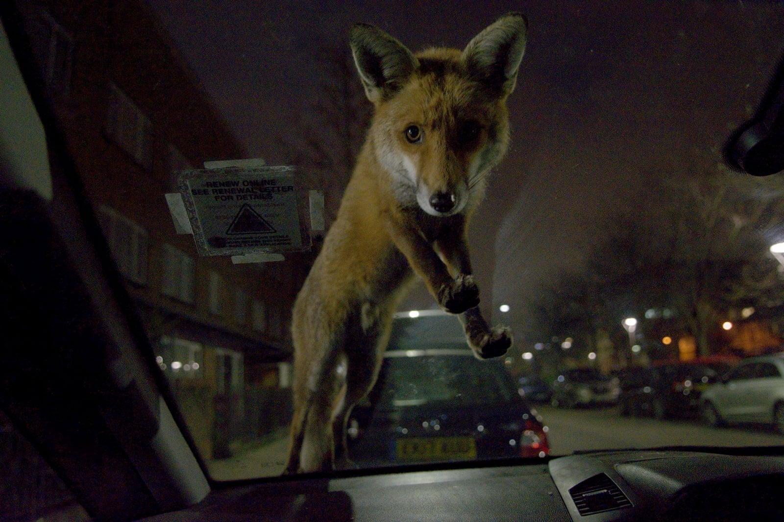 Mammal Photographer of the Year Overall Winner,