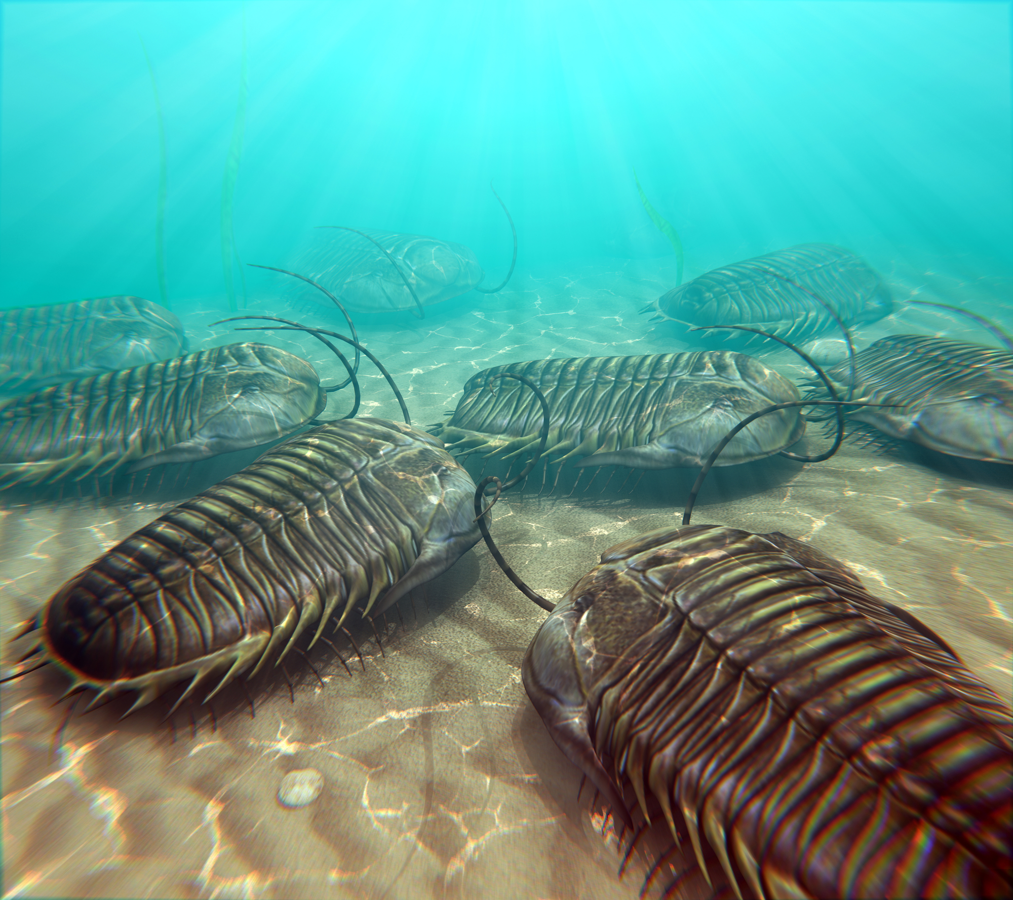 A new study has found that trilobites breathed oxygen through gills on their legs