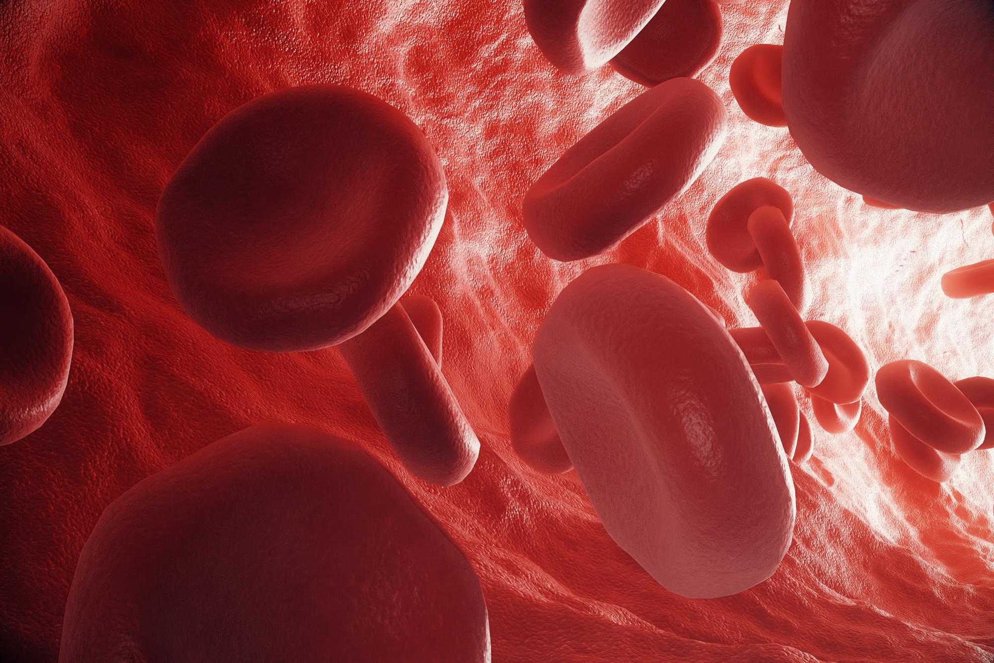 Red blood cells in vein or artery, flow inside inside a living organism. 3d rendering