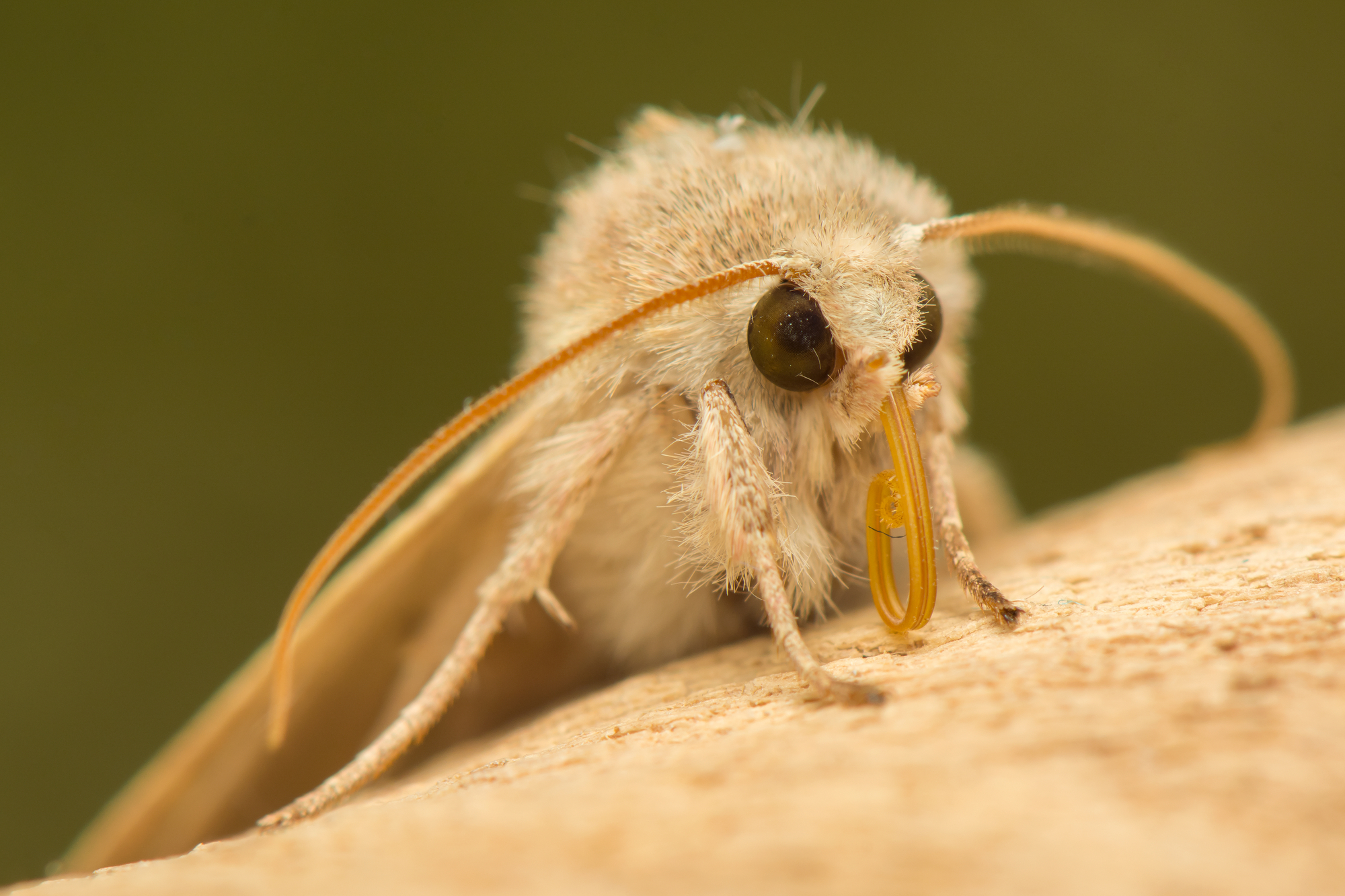Moth eyes have inspired a number of technological innovations, a list that now includes a new type of anti-icing structure with transparent properties