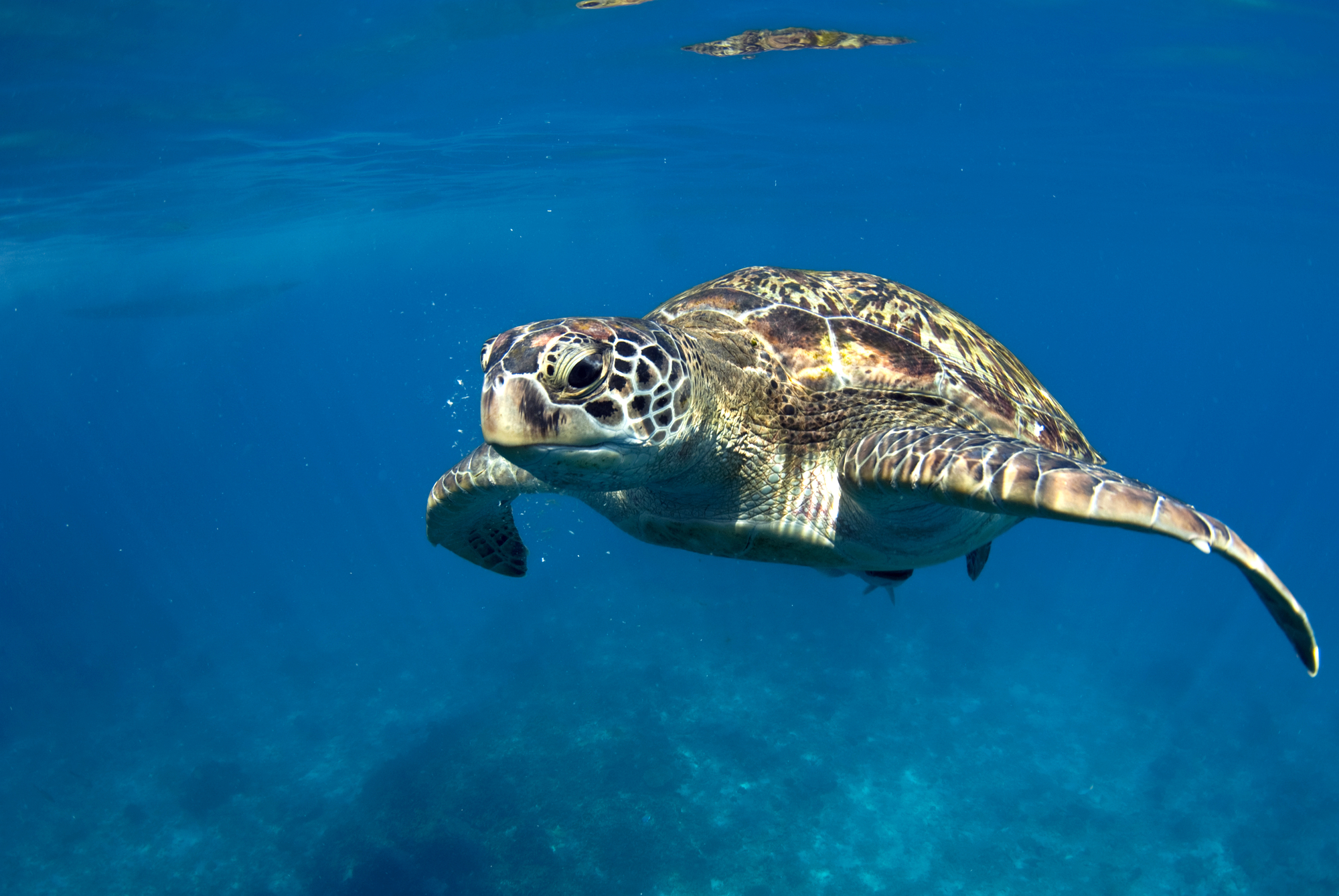 Putting lights on gillnets cuts bycatch of sea turtles and dolphins