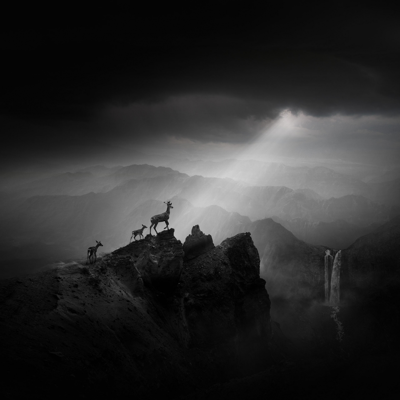 Commended, Open. 'Elks on the Mountain Top'. Changbai Mountain, Jilin Province, China
