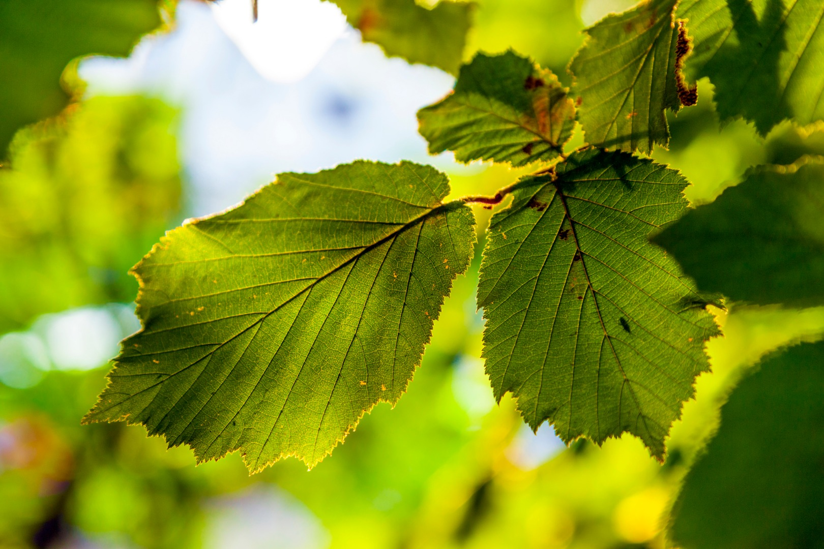 Real-world-ready artificial leaf can pluck carbon dioxide out of thin air
