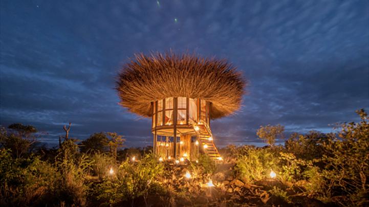 Bird Nest hotel sleeps Kenyan safari-goers above the treetops