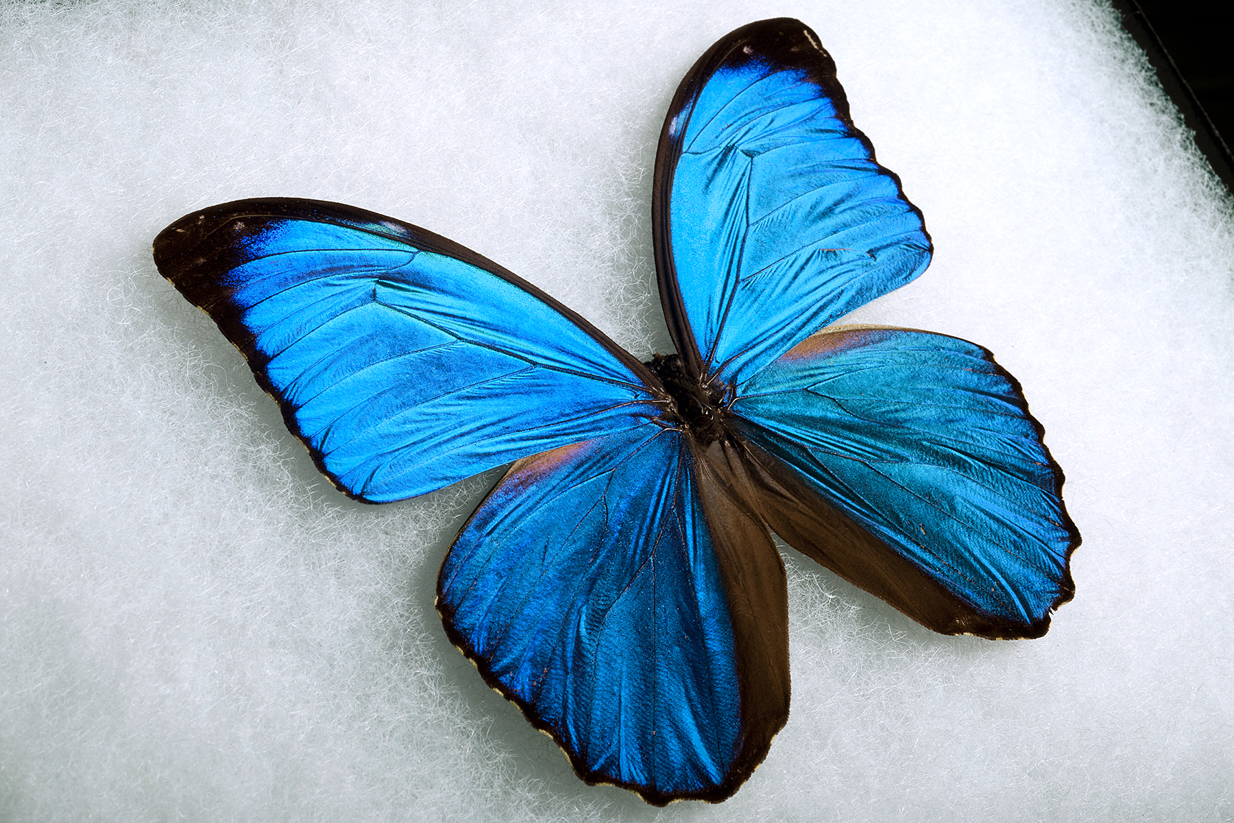 Butterfly vs shark: nature's clues to anti-dust materials