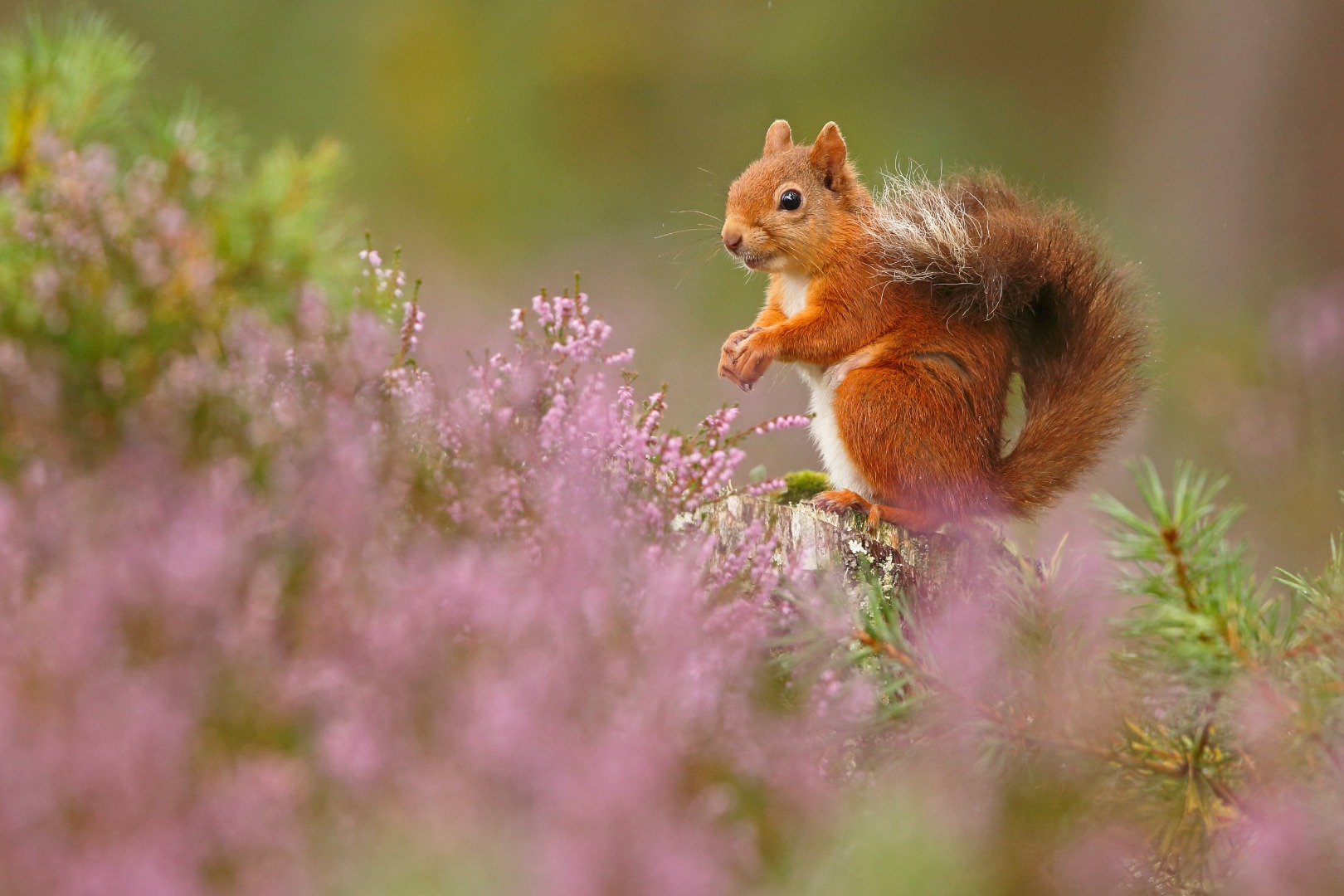 Bats, spiders and squirrels abound in the winners of the British Wildlife Photography Awards