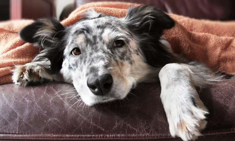 New vaccine developed for dog flu