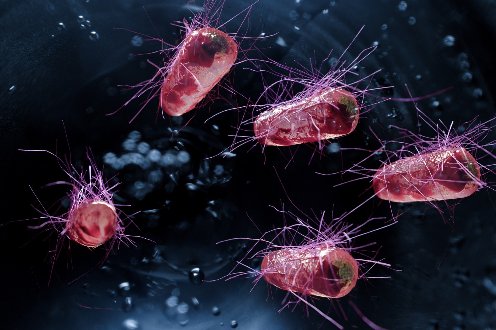 Probiotic engineered to clear ammonia from the body passes first phase of human trials