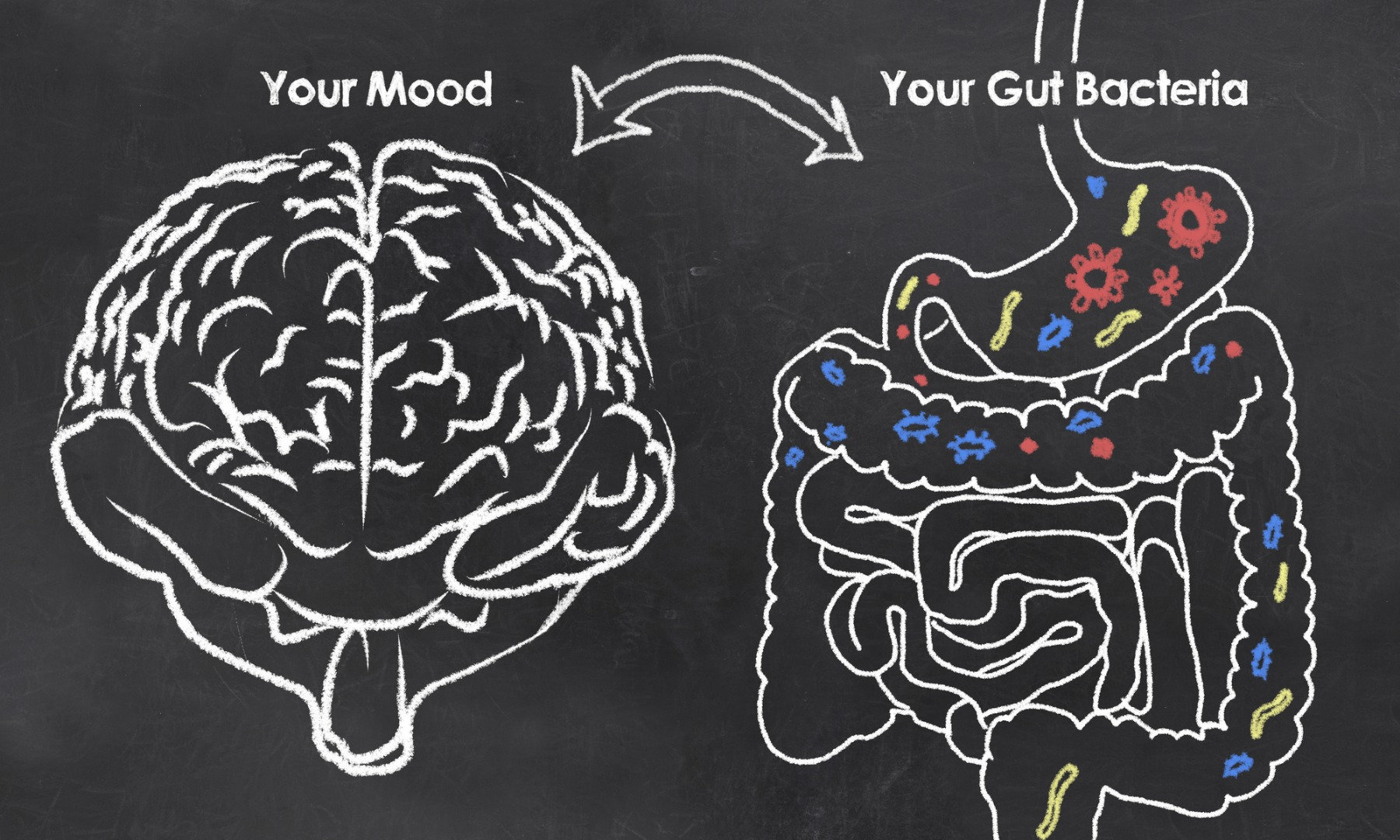 New evidence links specific gut bacteria to depression