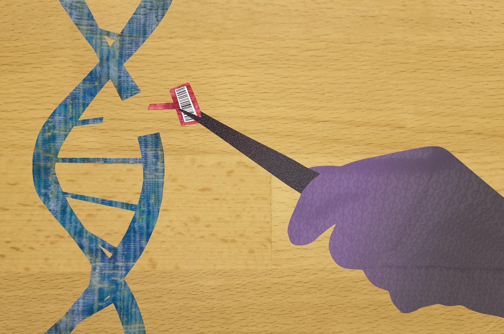 Move over, CRISPR: MAGESTIC makes for gentler gene-editing