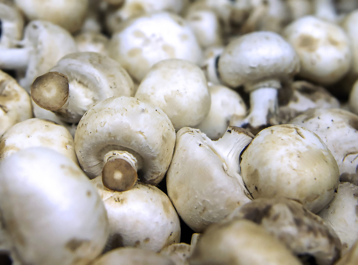 Mushrooms may be stuffed with anti-aging potential