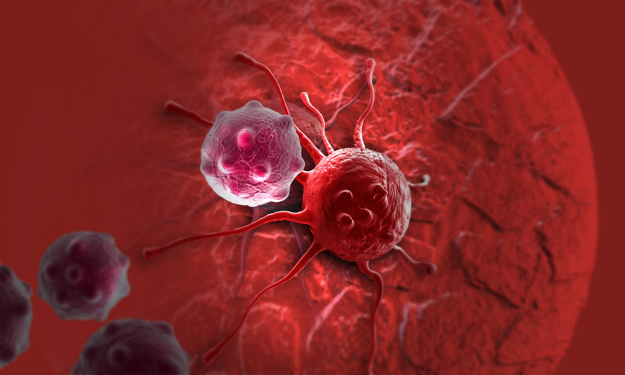 New research found dormant cancer cells can be reawakened by a process that is triggered by certain stress hormones