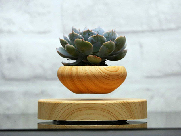 Bring a little magic into your home with this floating plant pot
