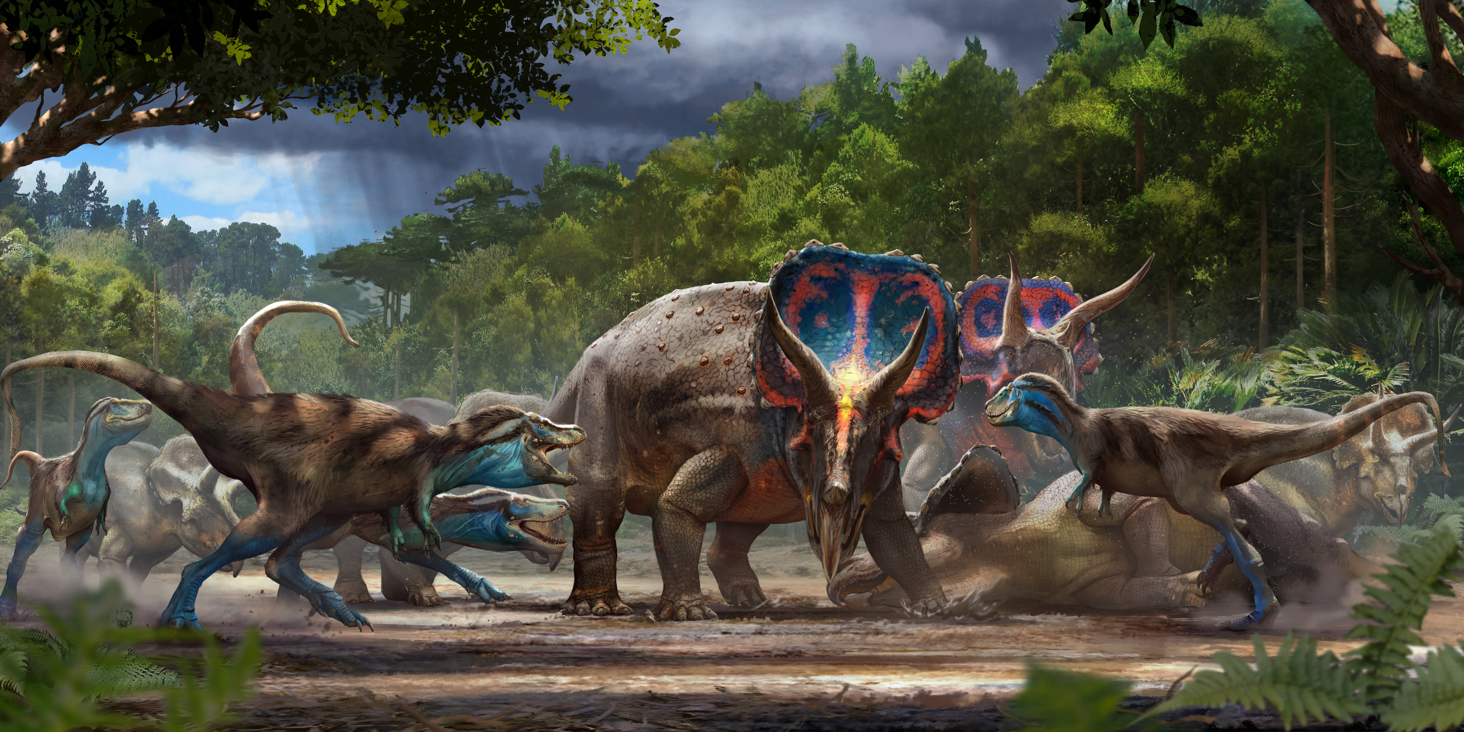 An artist's illustration of a group of young tyrannosaurs attacking a herd of Triceratops – an encounter that the Dueling Dinosaurs is said to have preserved