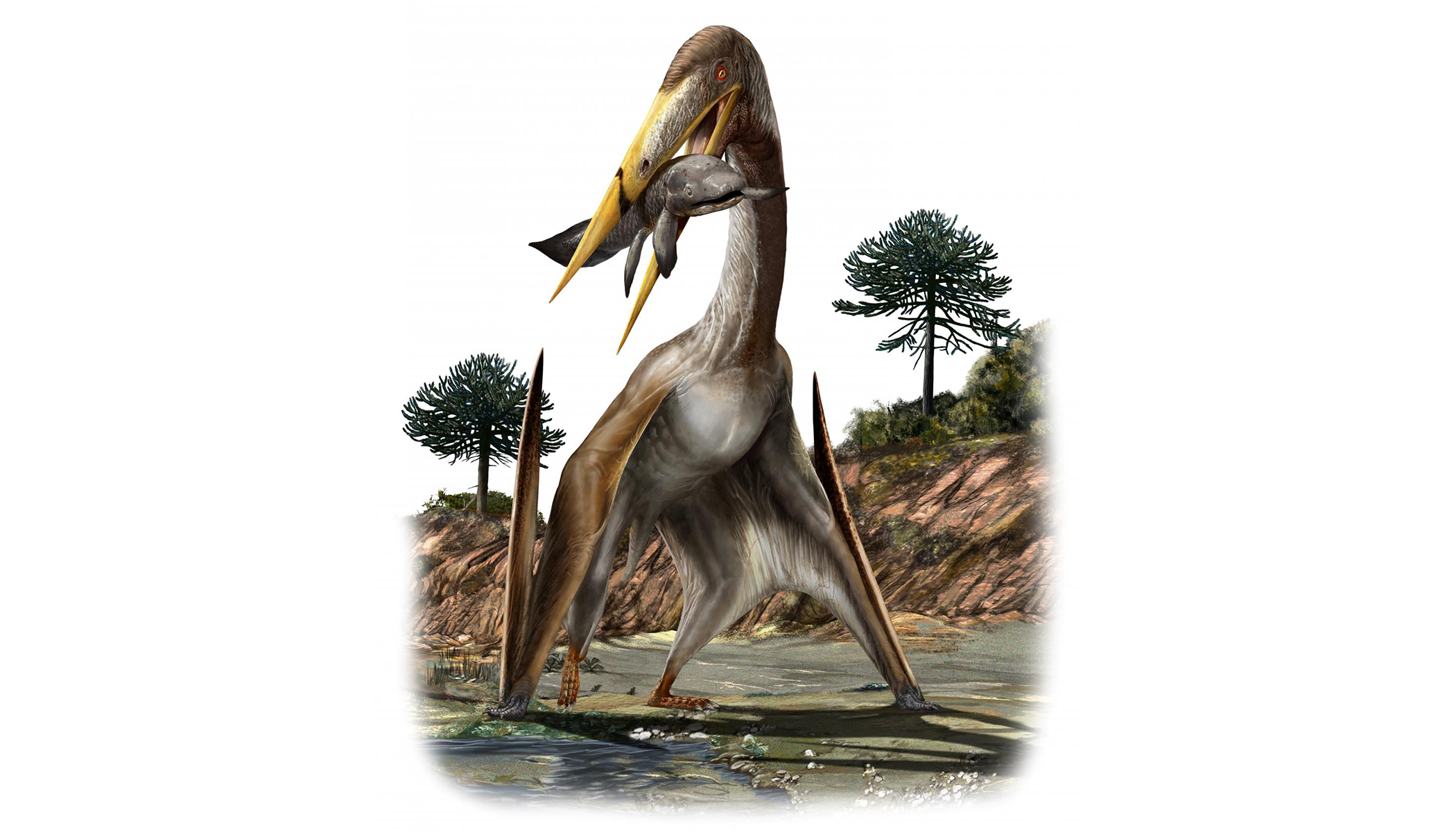 An illustration of a giant pterosaur