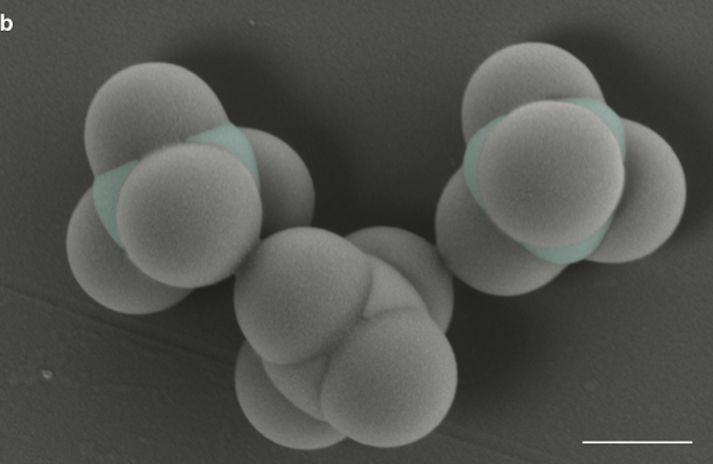 Diamond colloids, held together with DNA glue