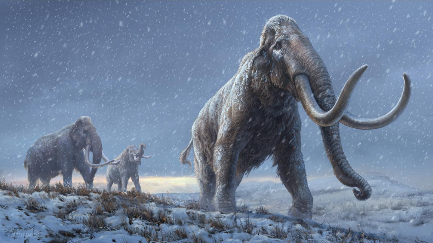A new DNA discovery reveals a previously unknown lineage of mammoth