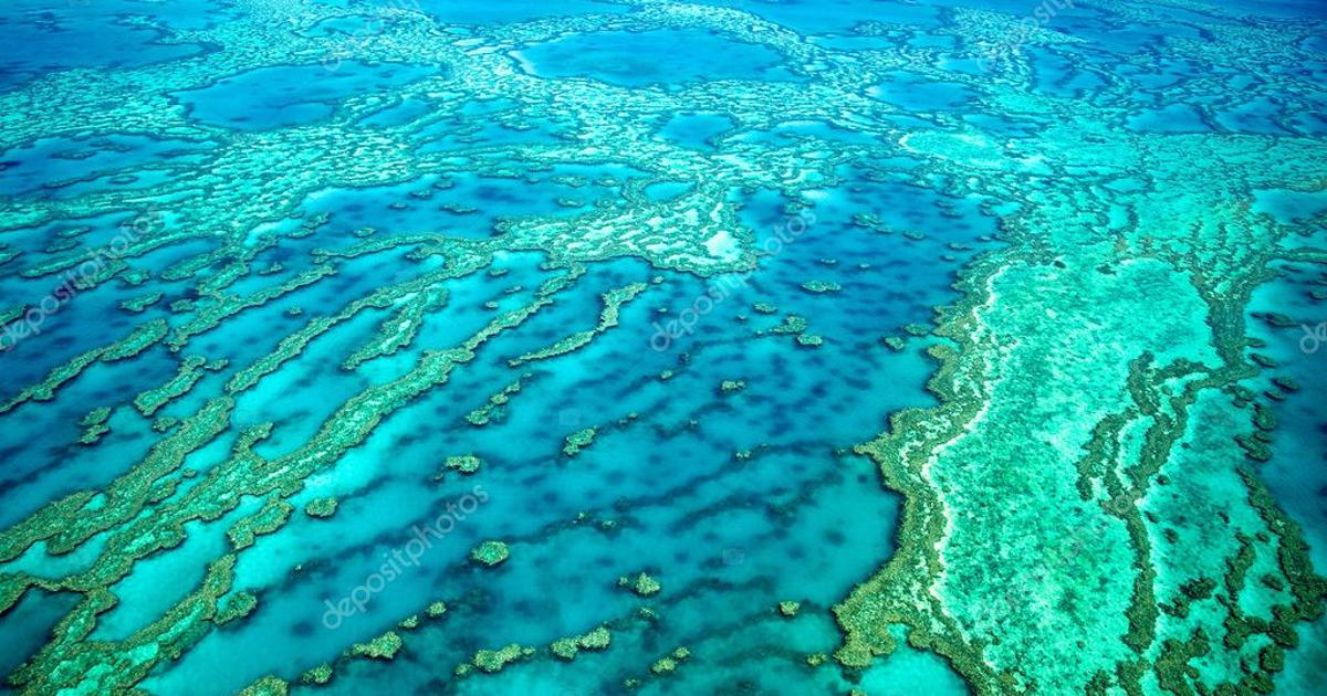 Nearly all coral reefs set for collapse by end of century, study finds