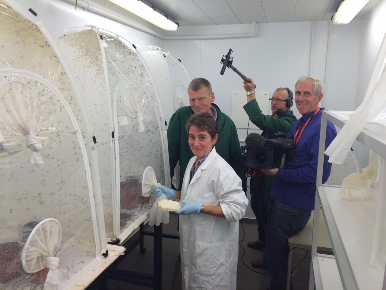 The EU is exploring the viability of fly larvae as a livestock food source. Dr Elaine Fitches, PROteINSECT project co-ordinator, with a BBC film crew.