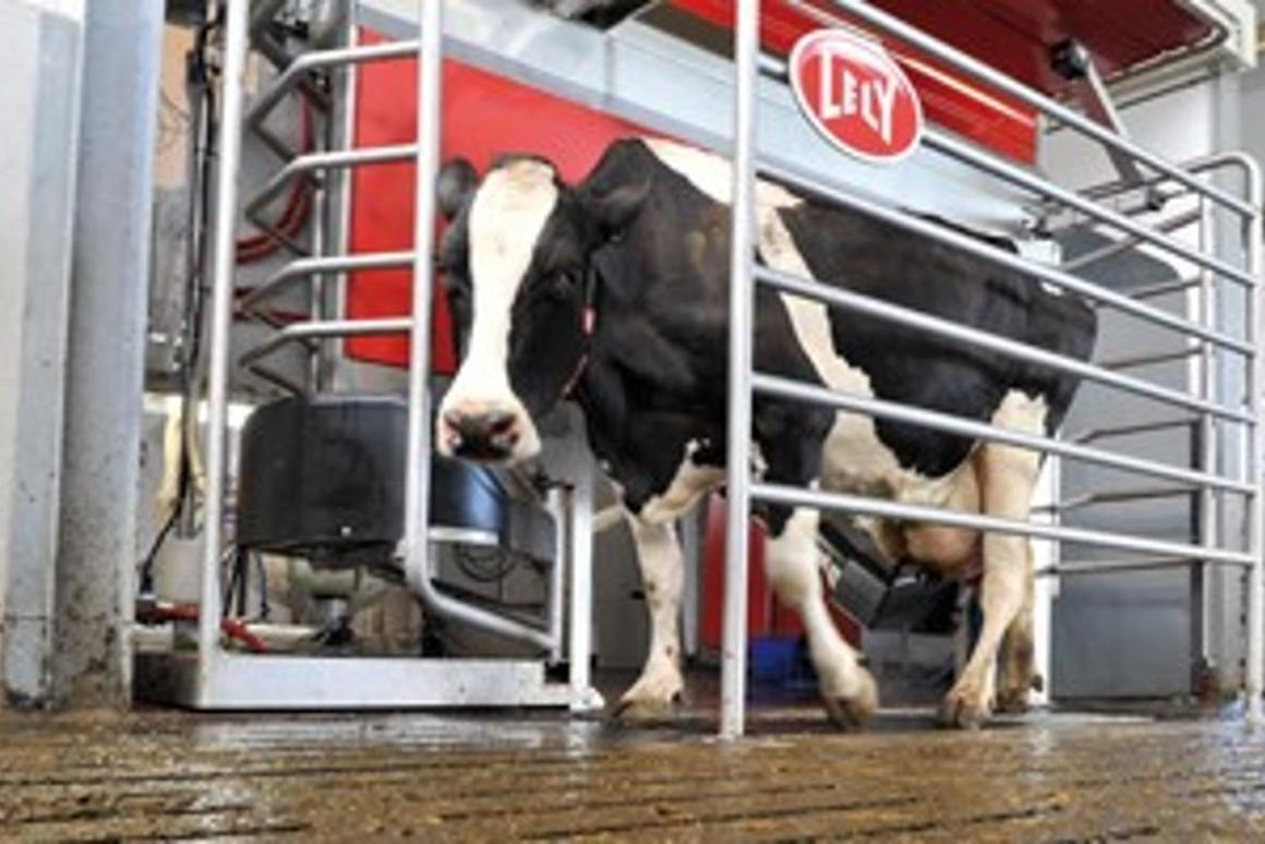 The Astronaut 4 robot milker is designed so that the cow doesn't need to turn or back up