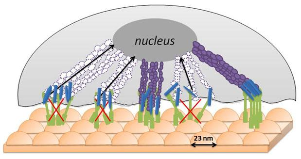 "An uneven ""bed of nails"" surface helps prevent cancerous cells from gathering the nutrients they need to flourish(Image: Webster Lab/Brown University)"