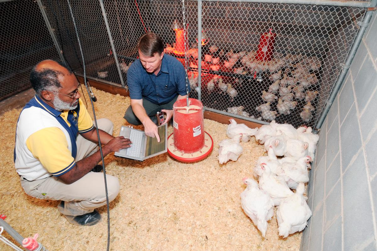 Wayne Daley (left), a Georgia Tech Research Institute principal research scientist, and Casey Ritz, a University of Georgia associate professor of poultry science, prepare to record chicken vocalizations