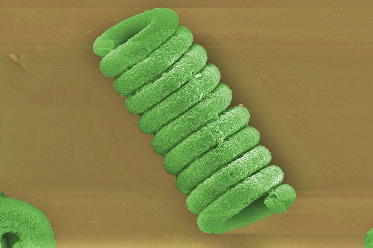 瑞士联邦材料科学实验室用螺旋藻净水,还可生产生物燃料