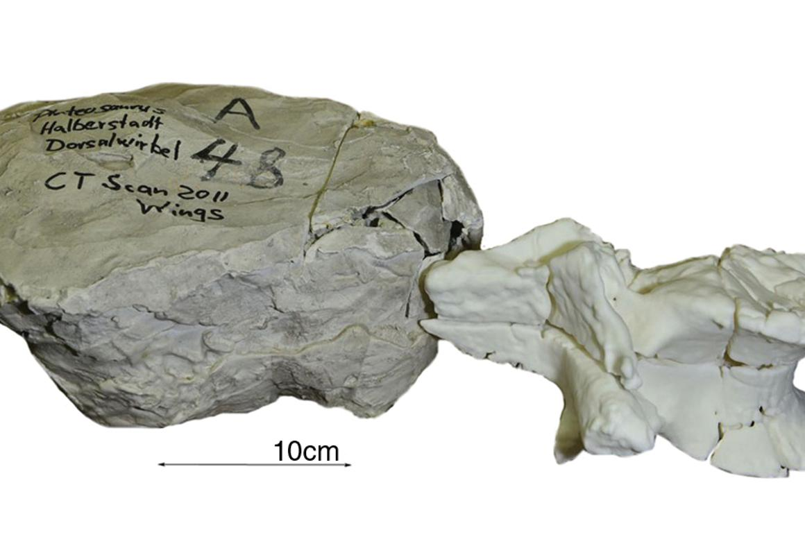 The 3D-printed vertebral body next to the original unprepared and erroneously labeled plaster jacket