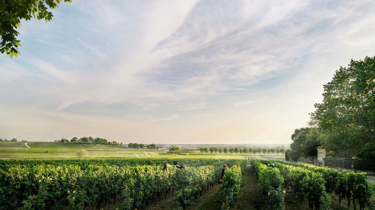 Le Dôme will be located in a picturesque area near Bordeaux