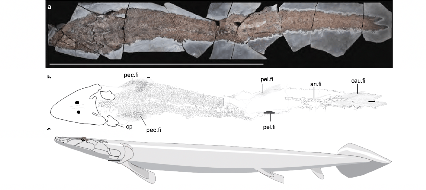 An ancient Elpistostege fish fossil found in Miguasha, Canada, has revealed new insights into how the human hand evolved from fish fins