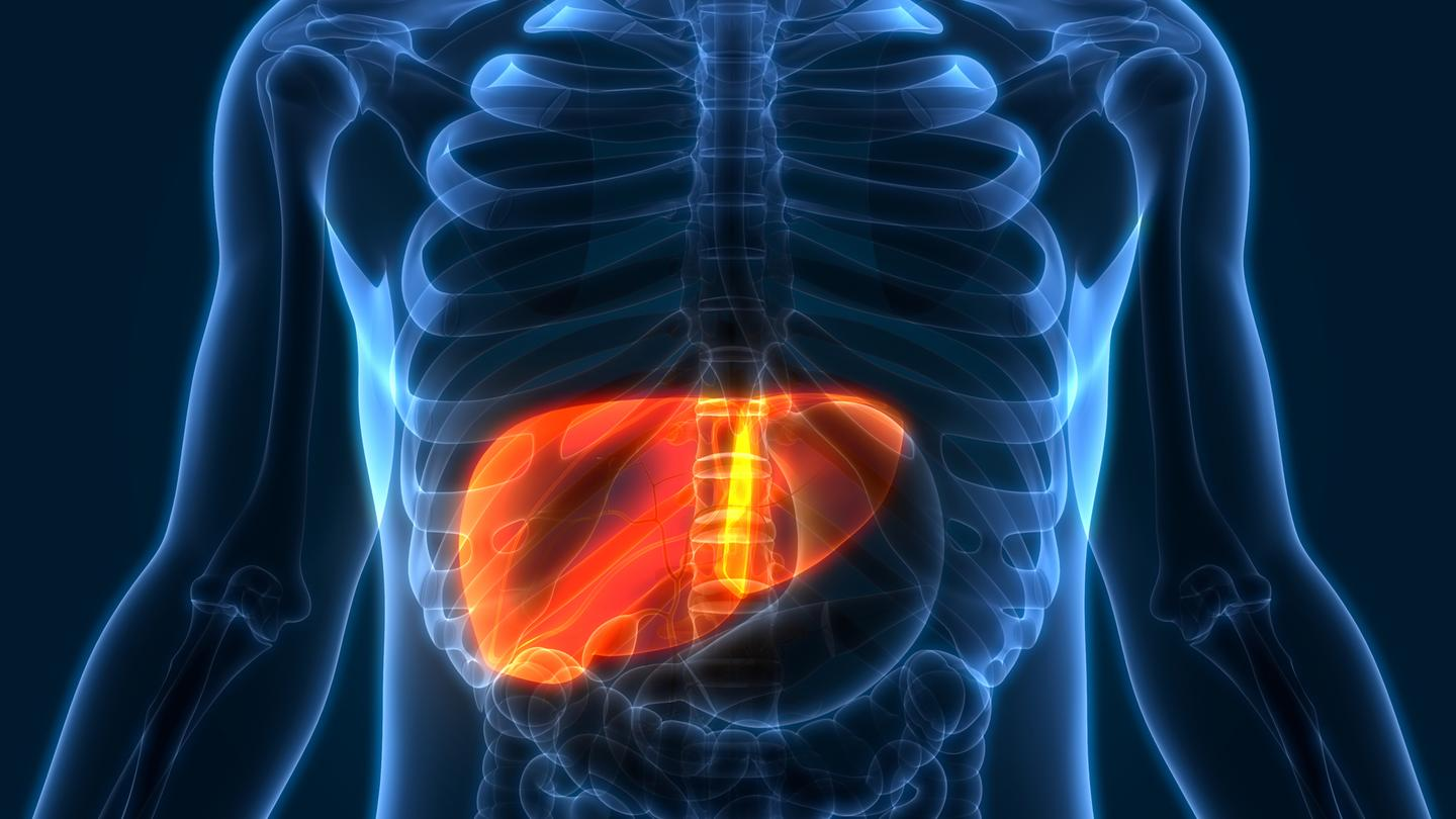 Researchers hypothesize excess production of a neurotransmitter in the liver could be a causal factor in type 2 diabetes