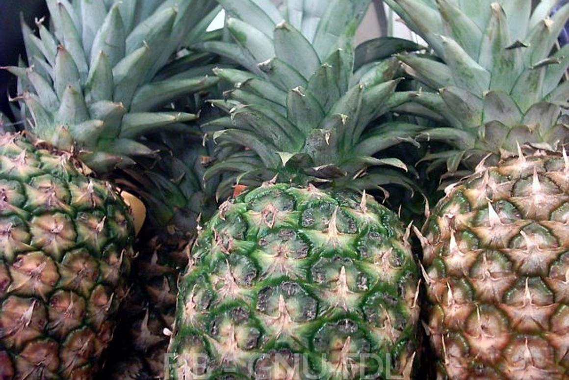 Fruit fibers used to create 'green' plastic for cars