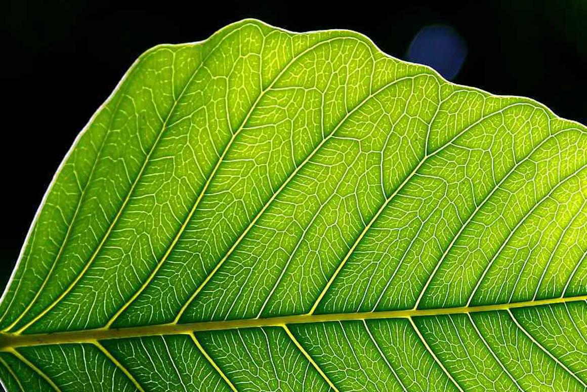 Scientists have taken a leaf from Mother Nature's book in designing a blueprint for an artificial leaf