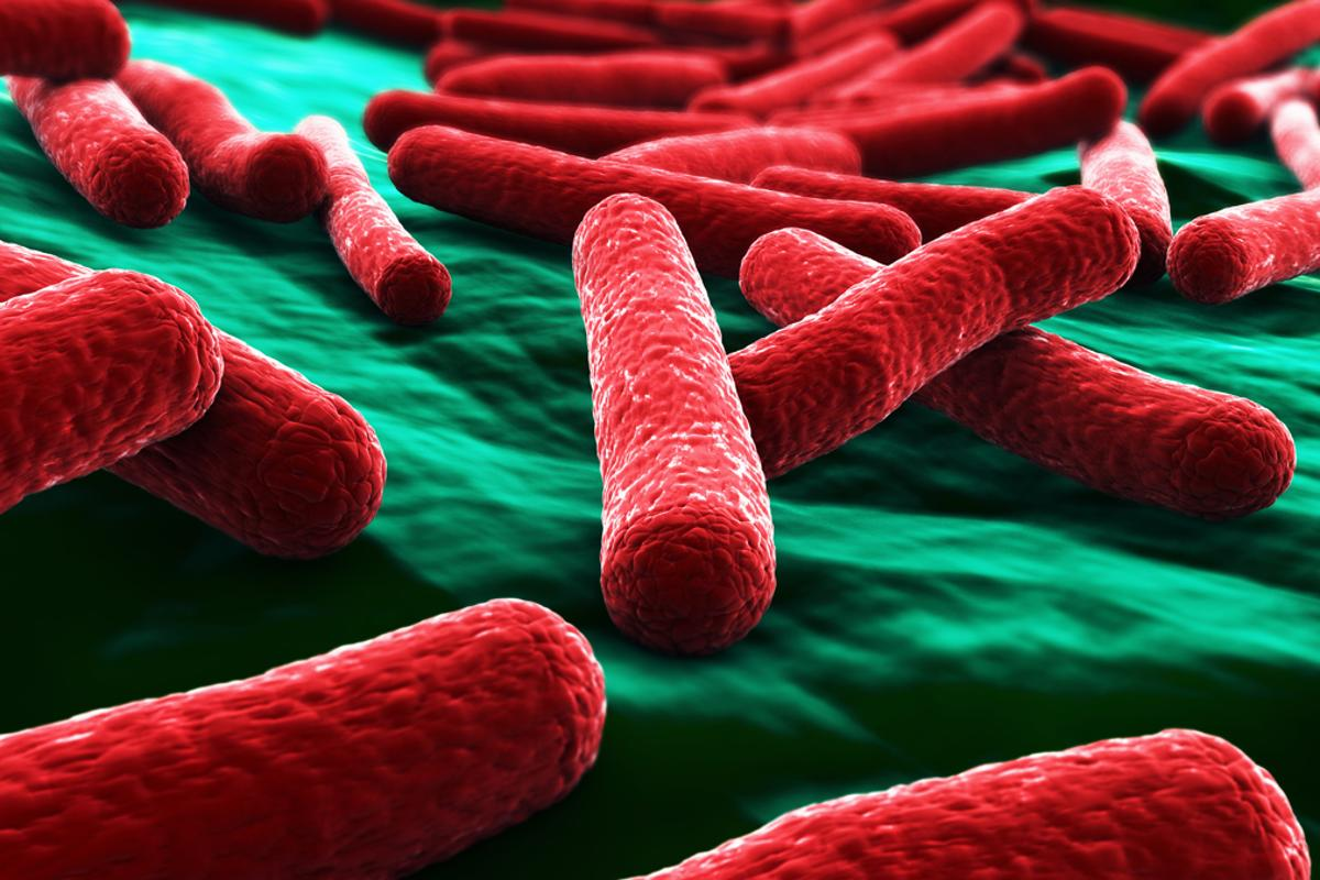 Researchers have modified a strain of E. coli to produce a lipid compound called NAPE in the gut (Image: Shutterstock)