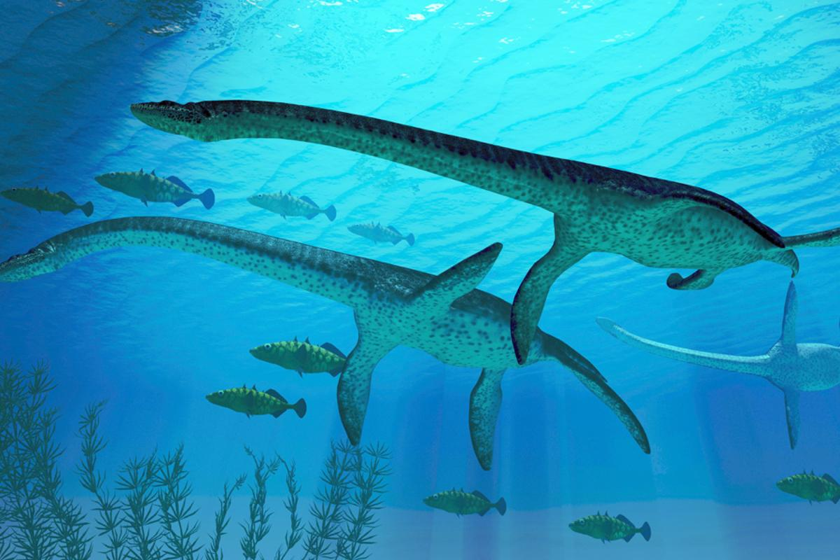 Plesiosaurs were apparently onto a good thing, a long time ago