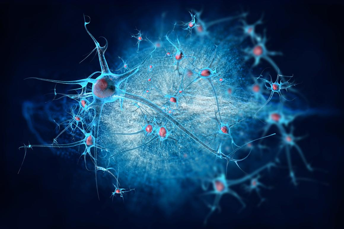 Evidence suggests age-related cognitive decline is not caused by brain cells dying but rather a simple reduction in plasticity, which could be reversed