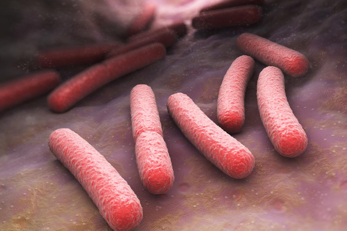 E. coli O157:H7 bacteria light up when infected with the Purdue virus