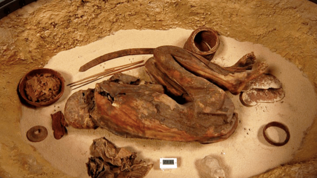Chemical analysis of a mummy has now revealed that the mummification process was being performed 1,500 years earlier than previously thought, across a wider area