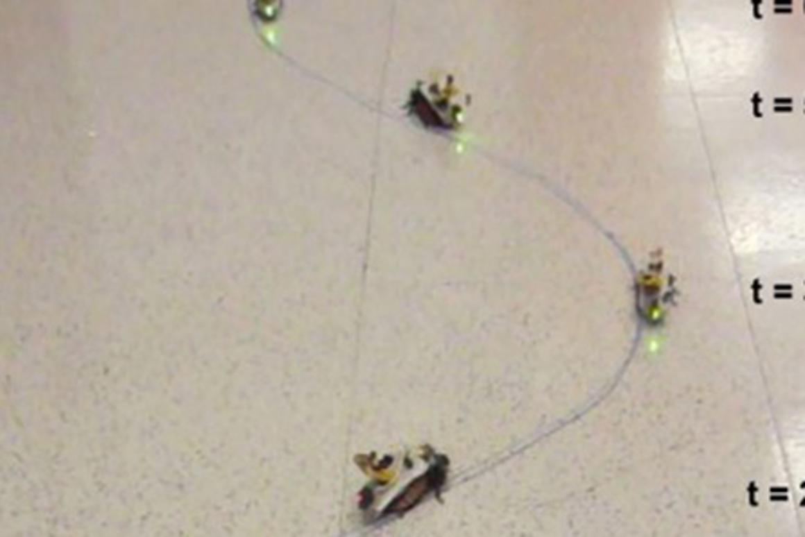 Scientists from North Carolina State University are working on remotely controlable sensor-equipped cockroaches
