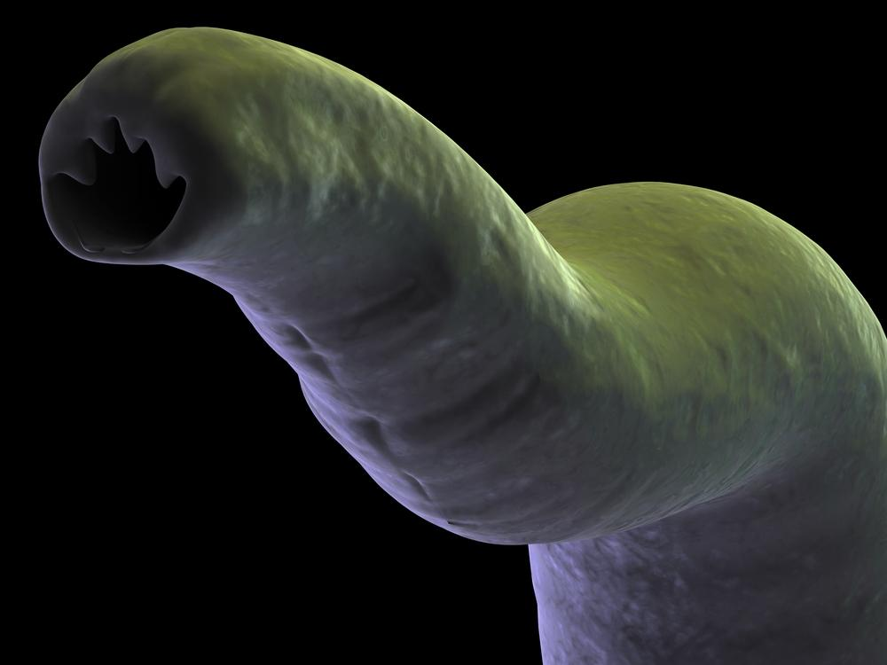 The new vaccine's active ingredient comes from hookworms themselves, a protein from a common species of adult hookworm (Photo: Shutterstock)