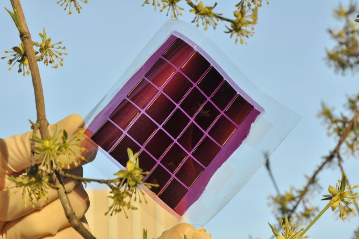 A flexible organic solar module developed by researchers at the Karlsruhe Institute of Technology