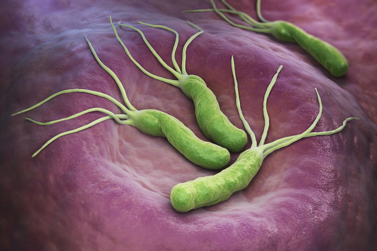 Researchers have found a potential new way to fight gram-negative bacteria, such as Helicobacter pylori
