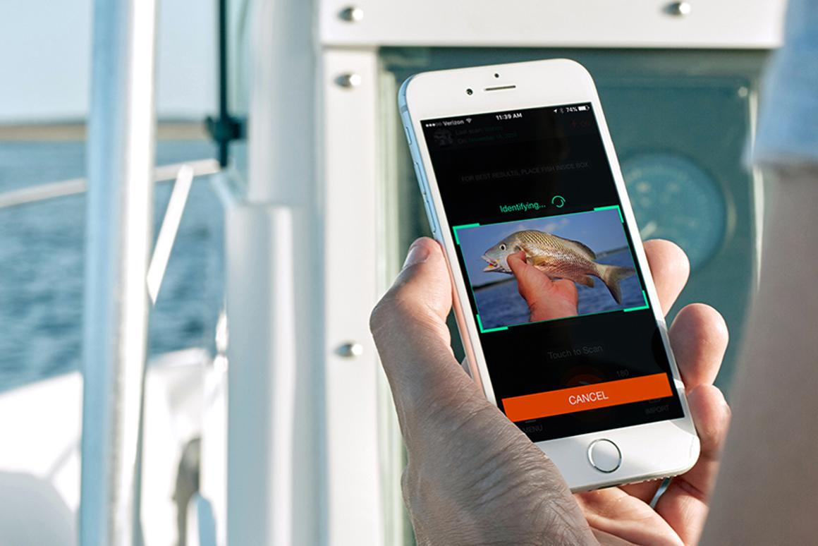 The creators are seeking funding to expand the area that FishVerify can operate in, ideallyaccessing laws and species fromother US states and eventually around the world